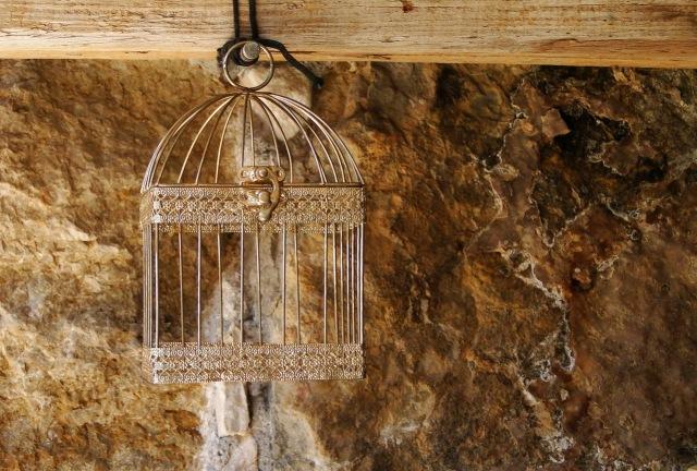 bird-cage-1411823-1279x865